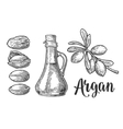 Set of argan branches leaves nuts For packing vector image
