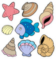 various shells and fish collection vector image