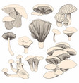 mushrooms hand drawing a set of for design and vector image vector image