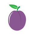 garden plum icon vector image