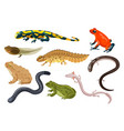 amphibian set exotic cartoon vector image vector image