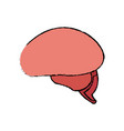 brain human healthy memory mind icon vector image vector image