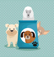 cute dogs with food vector image vector image