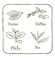 Various herbals - coffee mate cacao and tea vector image vector image