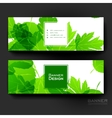 Beautiful banner template with autumn leaf vector image vector image