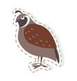 cute partridge bird cartoon flat sticker vector image vector image
