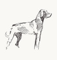 hand drawn a dog realistic sketch vector image vector image