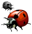 Ladybug closeup on white background vector image