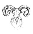 sketch by pen head of a mountain goat with vector image
