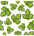 vegetable seamless pattern coriander or celery vector image vector image