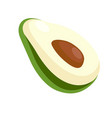 avocado half with big seed isolated on white vector image