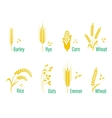 Cereals icon set with rice wheat corn oats rye vector image vector image