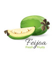 feijoa fresh fruits whole and cut vector image