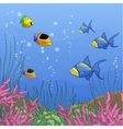 Underwater with coral reefs and tropical fishes vector image vector image