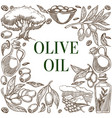olive oil fruits branch sketches frame poster vector image