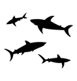 shark on white background vector image