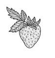 strawberry sketch vector image vector image