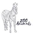 Hand drawn isolated sketch zebra Zoo animal vector image