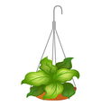 A hanging pot with green leafy plant vector image vector image