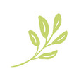 flat abstract green plants flower herbs vector image vector image