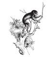 slender loris vintage vector image vector image
