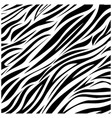 color zebra background icon vector image