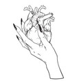 human heart in graceful female hand isolated vector image vector image
