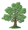 Oak tree and green grass vector image vector image