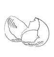 pictogram broken egg and shells sketch icon vector image