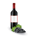wine bottle with grapes vector image