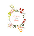 autumn colorful plants and leaves in decorative vector image