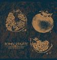 printdigital detailed color pomegranate vector image vector image
