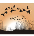 reeds and geese vector image vector image