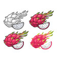 dragon fruit whole and slice vintage vector image vector image