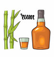 glass and bottle rum with sugar cane engraving vector image vector image