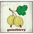 Hand drawing of gooseberry Fresh vector image vector image