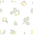 natural seamless pattern with blooming linden vector image vector image