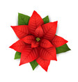 poinsettia isolated christmas flower vector image vector image