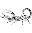 striker scorpion with a poisonous sting vector image vector image