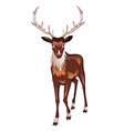 Brown Deer2 vector image vector image