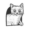 cat in cat house sketch vector image vector image