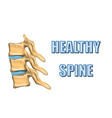 healthy spine vector image