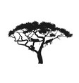 black silhouette african tree with lions vector image