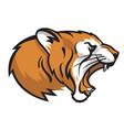 head a roaring tiger vector image vector image