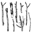 ink drawing wood twigs vector image