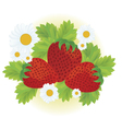 Strawberries and daisy flowers vector image vector image