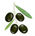 black realistic olives on white background vector image vector image