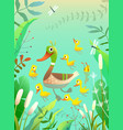 blue pond or swamp with mom duck family and chicks vector image
