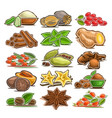 set of indian spices vector image