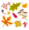 autumn floral set with leaves of oak leaves maple vector image vector image